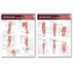 Lippincott Williams & Wilkins Atlas of Anatomy Musculature Chart Set