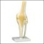 Functional Knee Joint (Right)