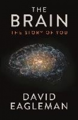 The Brain - The Story of You