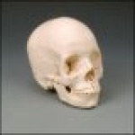 Skull Kit Bone Color